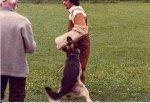 Bei der Schutzhunde-Prüfung